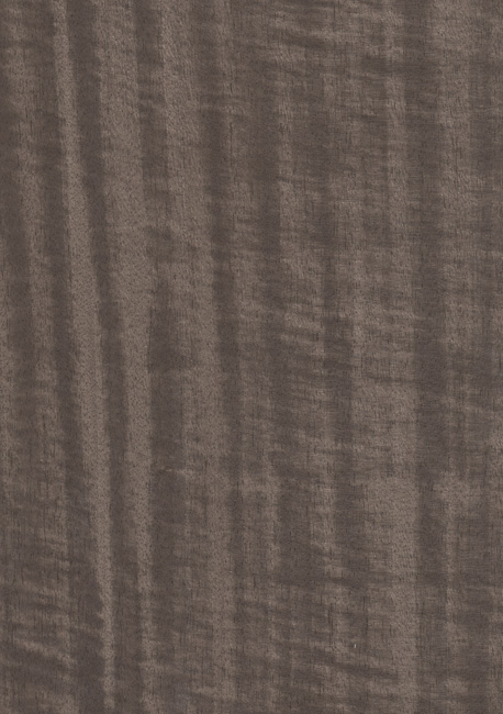 Dyed fig anigre C2C-347 1